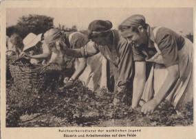 Kriegshilfsdienst des Reichsarbeitsdiens - Bäurein und Arbeitsmaiden auf dem Felde